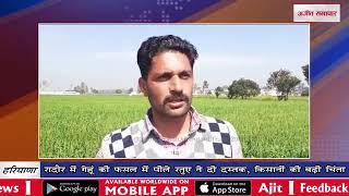 video : रादौर में गेहूं की फसल में पीले रतुए ने दी दस्तक, किसानों की बढ़ी चिंता