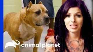 Adopted Dog Brought Back To Villalobos From A Mississippi Shelter!  | Pit Bulls & Parolees - ANIMALPLANETTV