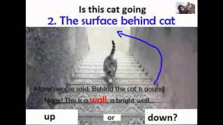 بعد اختفاء الفستان.. قطة تحير الملايين «طالعة ولا نازلة»؟