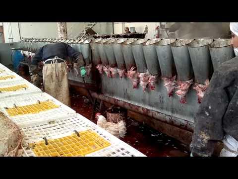 matadero aves