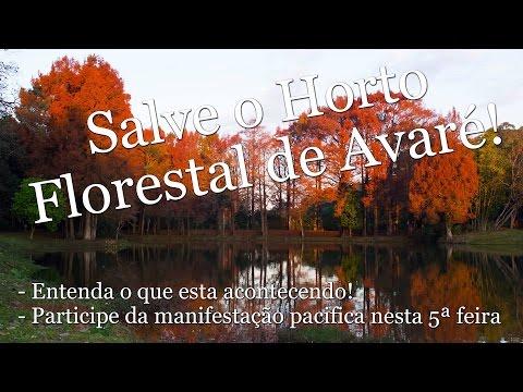 Salve o Horto Florestal de Avaré!