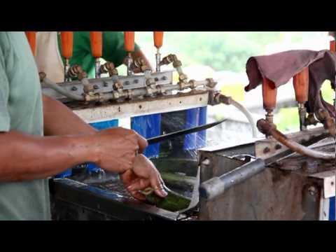 Proses Produksi Pupuk Organik Cair TRIPLUS