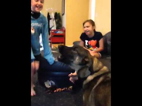 Dog singing rolling in the deep by Adele
