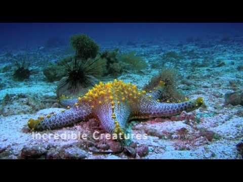 """Promo """"SEAS & OCEANS II"""""""