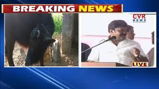 Minister Talasani Srinivas Yadav Speech At Buffalo Distribution Scheme in warangal | CVR News - CVRNEWSOFFICIAL