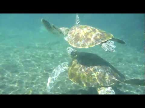 Swimming with the Turtles in Satoalepai in Savaii Samoa