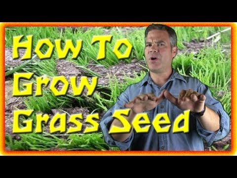 How To Grow Grass Seed - The Basics