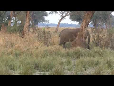 08102013 Mana Pools Elephants at the riverbank approaching a jeep YOU TUBE4