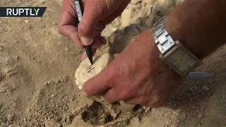 Ancient sea treasures: 10mn-year-old whale fossils discovered in Crimea - RUSSIATODAY