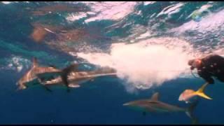 Shark Attack Survival Guide - Shark Tug of War - Shark Week 2010