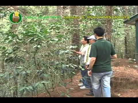 Arabica Coffee Research & Dev t in Cordillera Administrative Region; Coffee Production Technologies