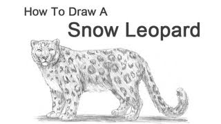 how to draw a snow leopard youtube