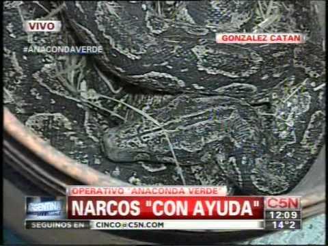 C5N -  POLICIALES:  PROTEGIAN DROGA CON UNA ANACONDA