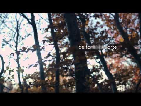 Ana Torroja - Disculpa (Lyric Video)