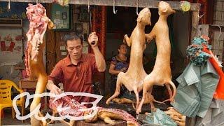"""بالفيديو.. الصين تبدا مراسم الاحتفال بــ""""مهرجان لحم الكلاب"""""""