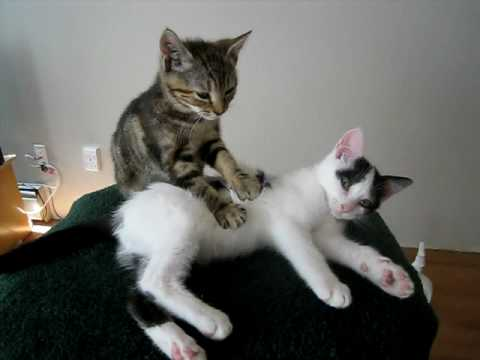 Welcome to Kitten Massage Therapy