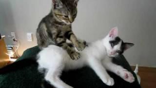 猫のマッサージというより、ムニムニ遊んでるよねw