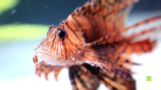 Check Out This Family's New Custom-Designed Fish Tank | Tanked - ANIMALPLANETTV