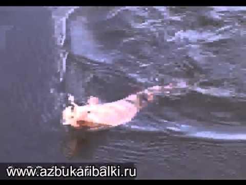 рыбалка в карелии 9 шлюз