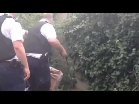 Police Grapple Two Huge Snakes In East London