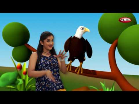 Marathi Rhymes For Children With Actions   Top 10 Bird Songs   मराठी बालगीत   Marathi Action Song