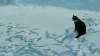 Kot na lodzie