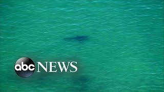 Suspected shark attack reported off the coast of Cape Cod - ABCNEWS