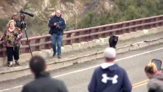 لقاء طريف بين دببة سوداء وبعض المارة على جسر وسط الغابة (فيديو)