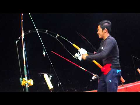 jigging tongkol D18