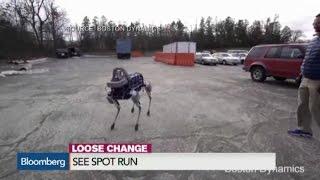 بالفيديو| Spot..