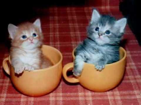 Śmieszne i Słodkie - Koty / Funny and sweet - Cats