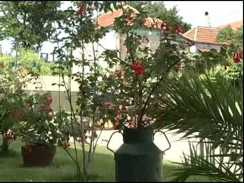 Najlepsa dvorista 2010_1 (Ljubisavljevic - Zlatovo).mp4