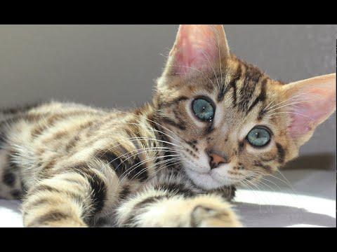 cat has crystals in bladder