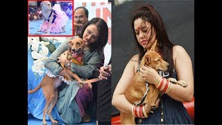 Canines' day out at 'The Great Indian Dog Show 2018' in Chennai - TIMESOFINDIACHANNEL