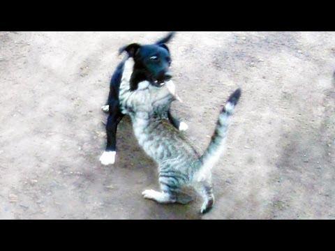 Jui Jitsu Cat vs Dog Funny Fight HD / Кот мастер Джиу Джитсу vs Собака