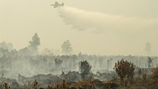 Why Indonesia Is One of the Worst Climate Change Offenders in the World - BLOOMBERG