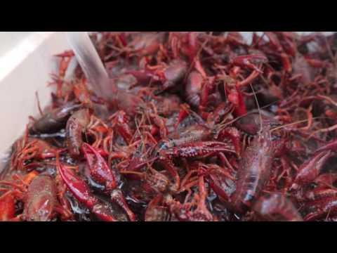 Meet In The Middle: Crawfish in Ruston, La.