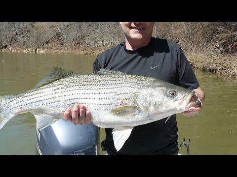 Ternak Ikan
