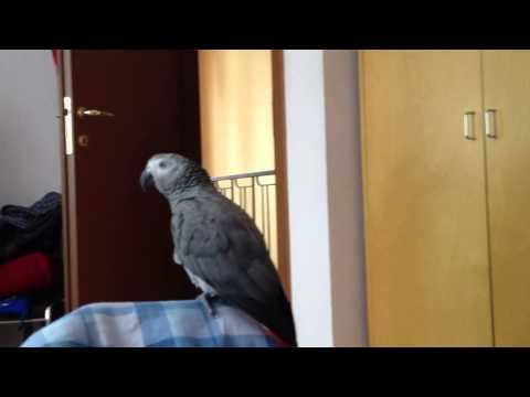 Papagalul Paulie canta Vara nu Dorm part.6