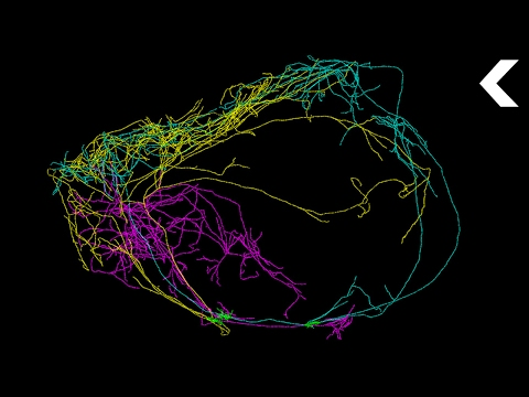 This Giant Neuron Could Explain Where Consciousness Comes From
