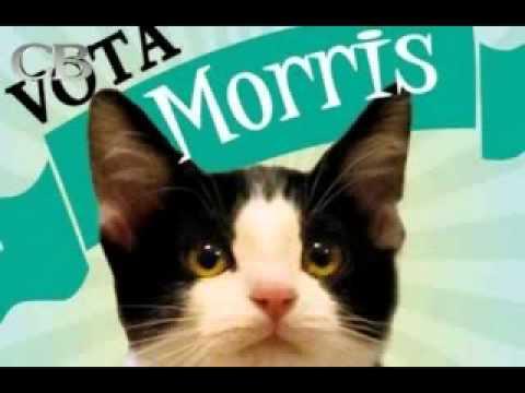 Campaña del Candigato Morris