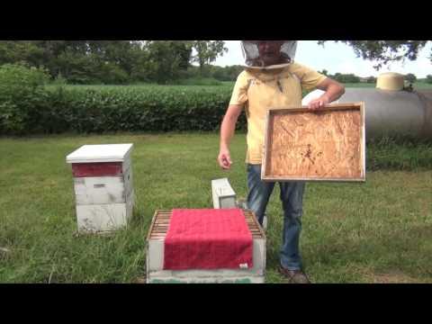 Beekeeping Harvesting Honey