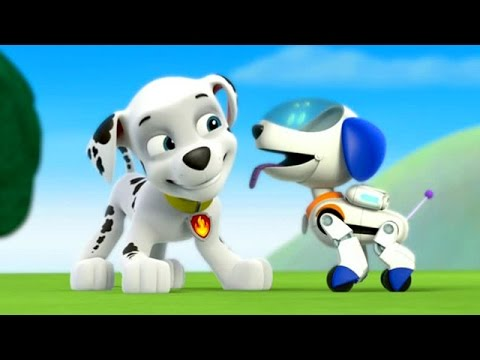 Paw Patrol Academy Game  - Paw Patrol Cartoon Nick JR English  - Paw Patrol full Episodes