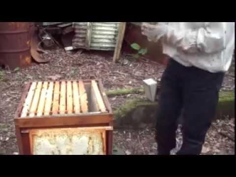 Norfolk beekeepers. Beekeeping inspection spring feeding and tips