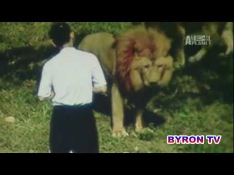 Lion Attacks Preacher