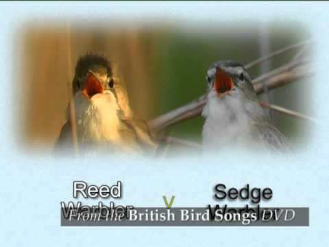 British Bird Songs