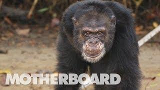 فيديو وصور..«كوكب القرود »موجود في الواقع