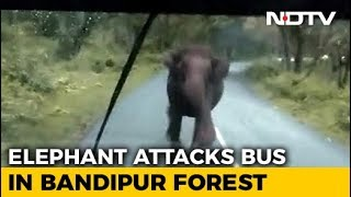 Panic On Bus, Driver Hits Reverse As Elephant Charges. Watch - NDTV