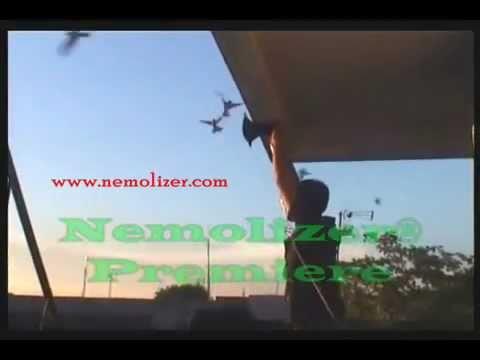 Nemolizer Premiere, Suara walet Swiftlet sound