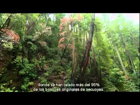 Cambio Climatico Desvastacion del Planeta